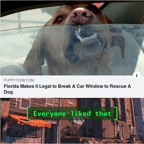 Photo caption - PUPPYTOOB.COM Florida Makes it Legal to Break A Car Window to Rescue A Dog Everyone 1iked that