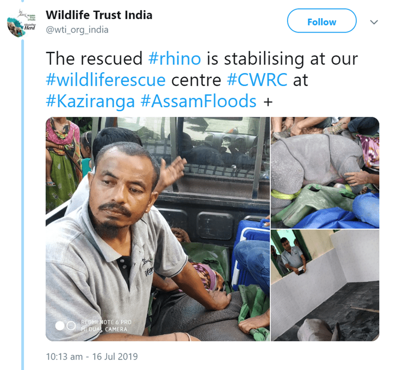 Product - Wildlife Trust India Herd@wti_org_india viate Follow The rescued #rhino is stabilising at our #wildliferescue centre #CWRC at #Kaziranga #AssamFloods + ifa REDMI NOTE 6 PRO MI DUAL CAMERA 10:13 am 16 Jul 2019 -