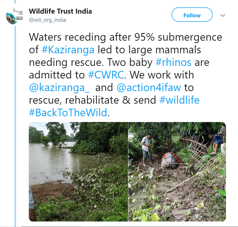 Vegetation - Wildlife Trust India Follow Herd @wti_org_india Waters receding after 95% submergence of #Kaziranga led to large mammals needing rescue. Two baby #rhinos are admitted to #CWRC. We work with @kaziranga_ and @action4ifaw to rescue, rehabilitate & send #wildlife #BackToTheWild. 44