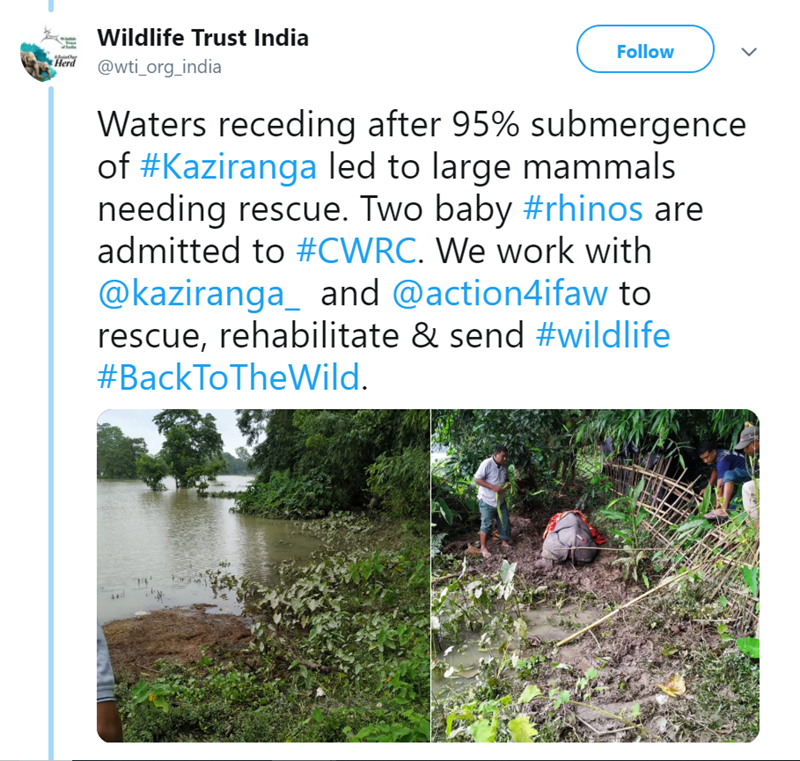 Vegetation - Wildlife Trust India Follow Herd @wti_org_india Waters receding after 95% submergence of #Kaziranga led to large mammals needing rescue. Two baby #rhinos are admitted to #CWRC. We work with @kaziranga_ and @action4ifaw to rescue, rehabilitate & send #wildlife #BackToTheWild. 44