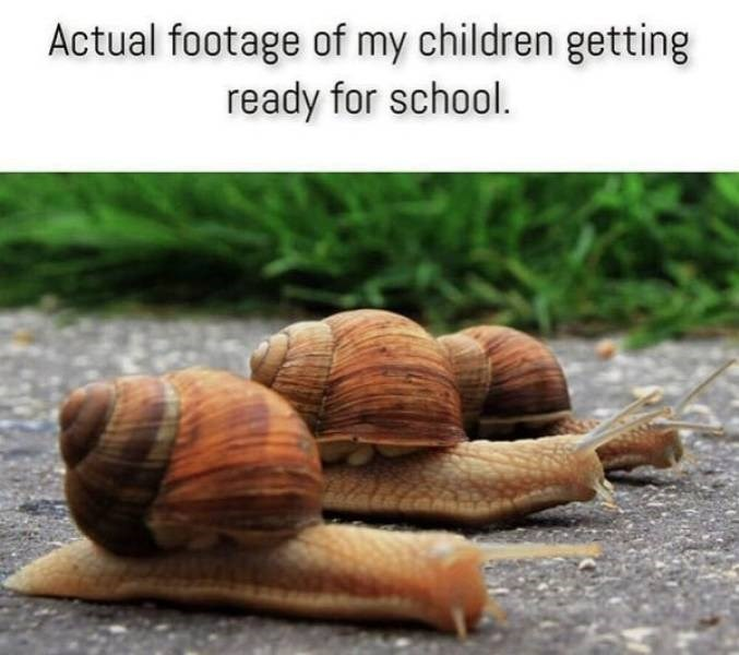 parenting meme - Snails and slugs - Actual footage of my children getting ready for school.