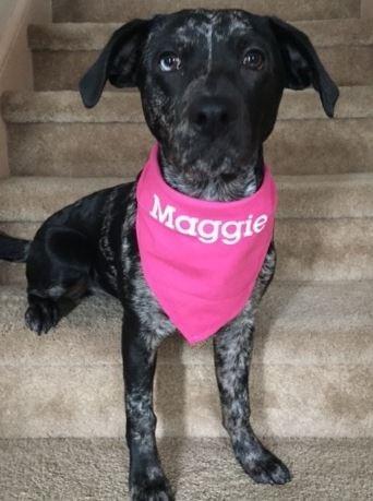 Dog - Maggie