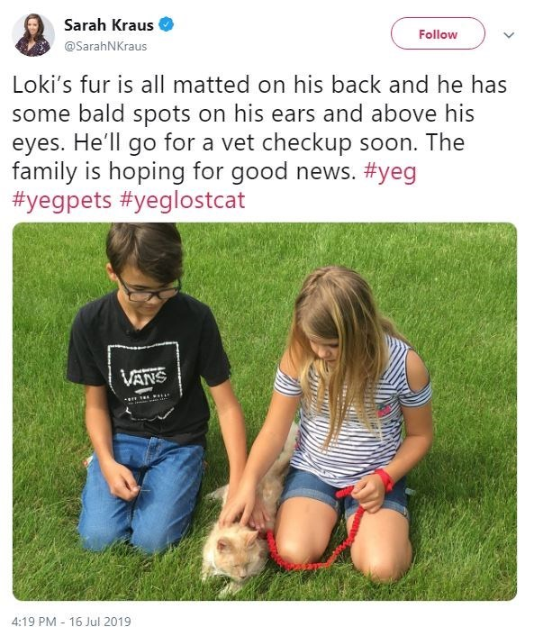 Grass - Sarah Kraus Follow @SarahNKraus Loki's fur is all matted on his back and he has some bald spots on his ears and above his eyes. He'll go for a vet checkup soon. The family is hoping for good news. #yeg #yegpets #yeglostcat VANS ittar 4:19 PM 16 Jul 2019