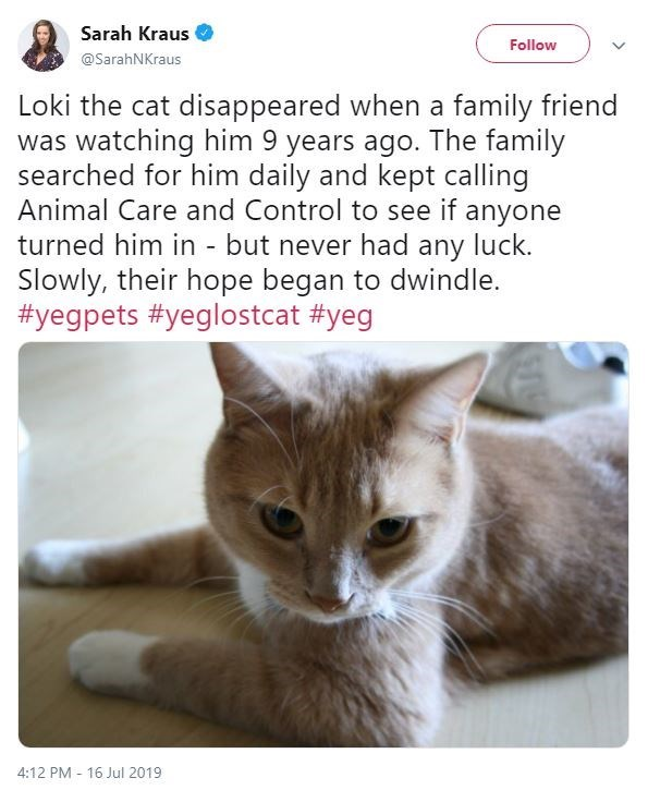 Cat - Sarah Kraus Follow @SarahNKraus Loki the cat disappeared when a family friend was watching him 9 years ago. The family searched for him daily and kept calling Animal Care and Control to see if anyone turned him in - but never had any luck. Slowly, their hope began to dwindle. #yegpets #yeglostcat #yeg 4:12 PM 16 Jul 2019