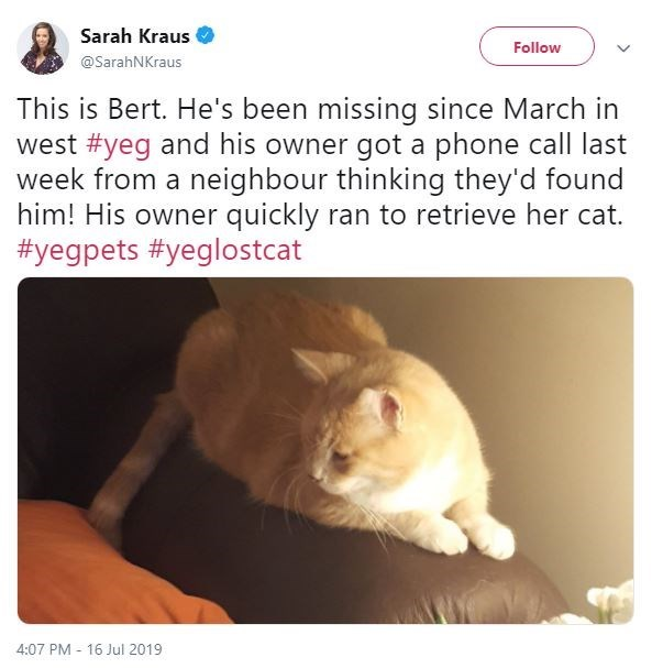 Text - Sarah Kraus Follow @SarahNKraus This is Bert. He's been missing since March in west #yeg and his owner got a phone call last week from a neighbour thinking they'd found him! His owner quickly ran to retrieve her cat. #yegpets #yeglostcat 4:07 PM 16 Jul 2019