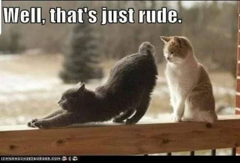 Cat - Well, that's just rude. ICANHASCHEEZBURGER.COM