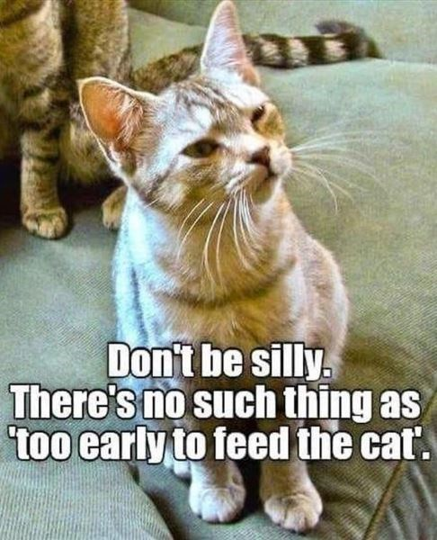 Cat - Don't be silly There's no such thing as too early to feed the cat.