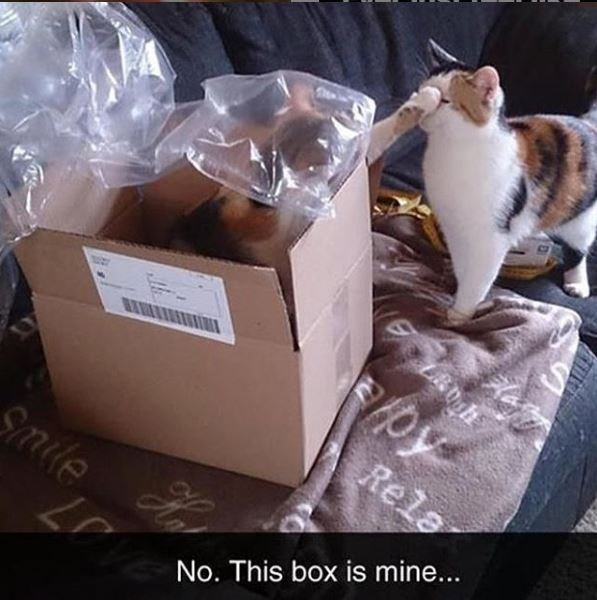 Cat - Rela Sile No. This box is mine... Ke