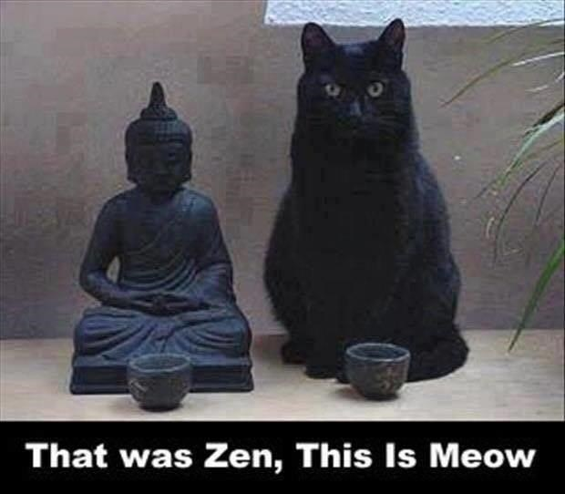cat buddha statue Cats - 9333943552