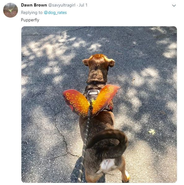 Canidae - Dawn Brown @savyultragirl Jul 1 Replying to @dog. rates Pupperfly