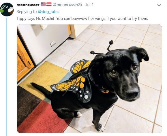 Dog - @mooncusser2k Jul 1 mooncusser Replying to @dog_rates Tippy says Hi, Mochi! You can bowwow her wings if you want to try them