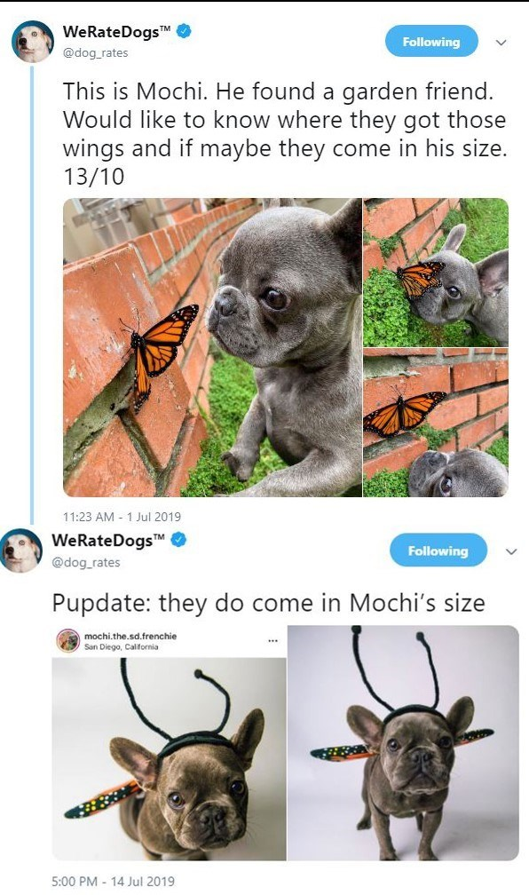 Mammal - WeRateDogsTM @dog rates Following This is Mochi. He found a garden friend. Would like to know where they got those wings and if maybe they come in his size. 13/10 11:23 AM 1 Jul 2019 WeRateDogsTM Following @dog rates Pupdate: they do come in Mochi's size mochi.the.sd.frenchie San Diego, California 5:00 PM 14 Jul 2019