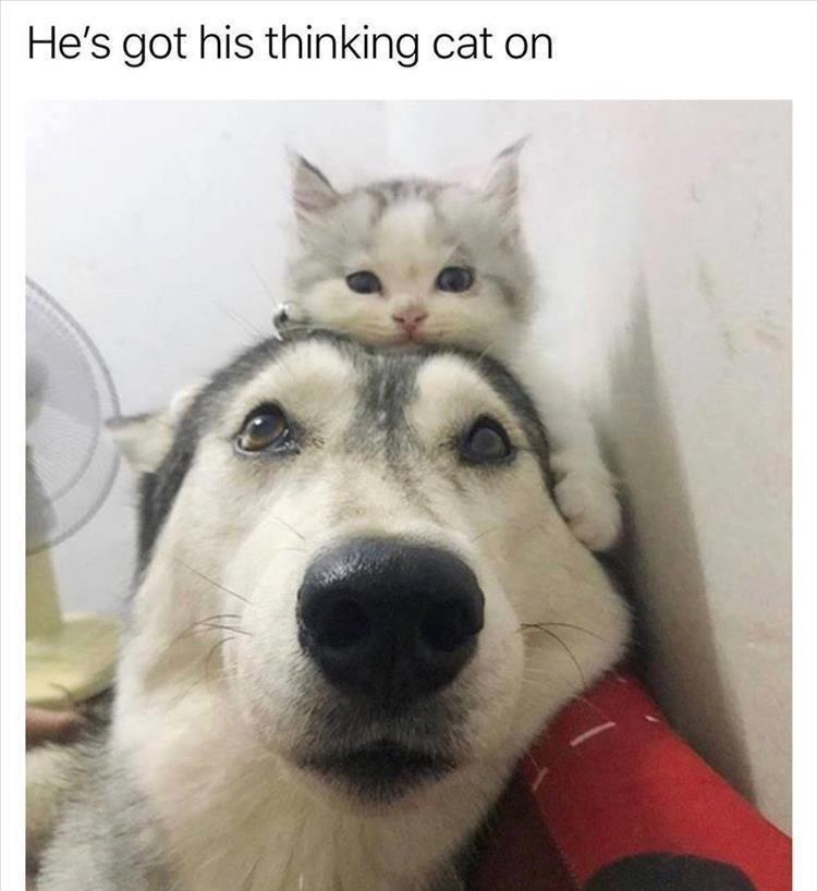 cat dogs cute - 9333955072
