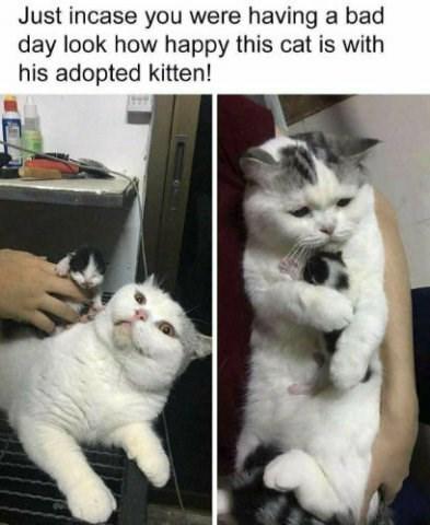 kitten cute adopted Cats - 9333973760