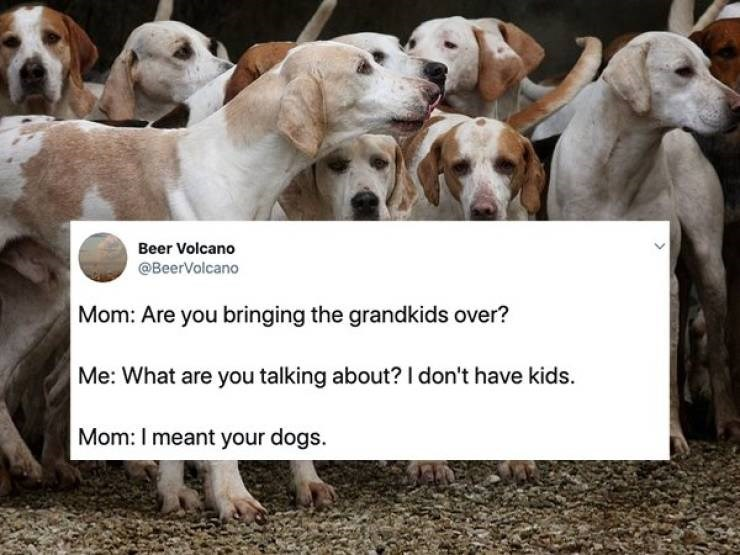 "Text message - ""Mom: Are you bringing the grandkids over? Me: What are you talking about? I don't have kids Mom: I meant your dogs"""