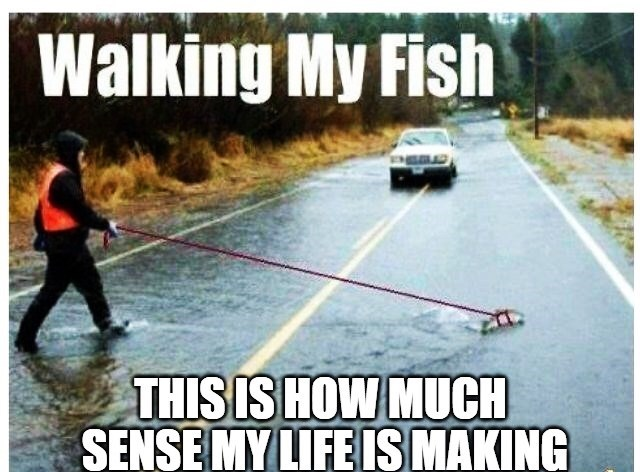 """Meme - """"Walking My Fish THIS IS HOW MUCH SENSE MY LIFE IS MAKING"""""""