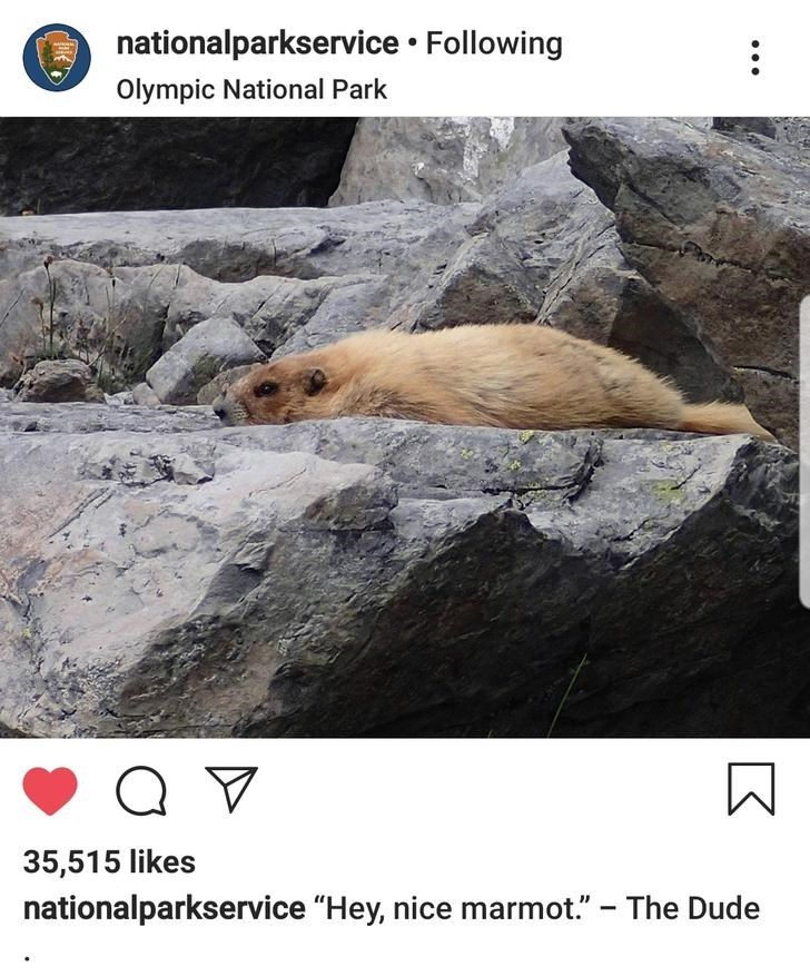 """Fur seal - nationalparkservice Following Olympic National Park 35,515 likes nationalparkservice """"Hey, nice marmot."""" The Dude 7"""