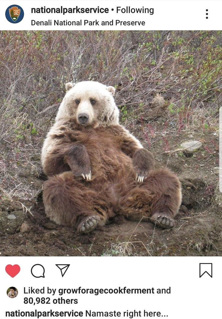 Vertebrate - nationalparkservice Following Denali National Park and Preserve Q V Liked by growforagecookferment and 80,982 others nationalparkservice Namaste right here...