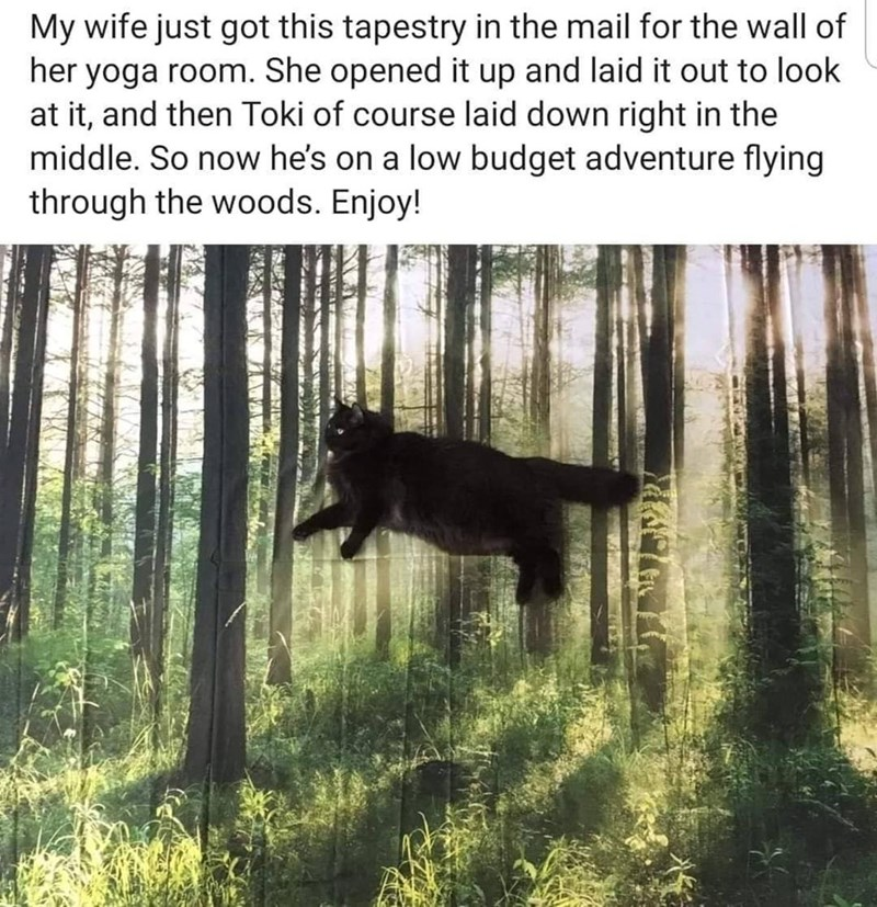 Text - My wife just got this tapestry in the mail for the wall of her yoga room. She opened it up and laid it out to look at it, and then Toki of course laid down right in the middle. So now he's on a low budget adventure flying through the woods. Enjoy!
