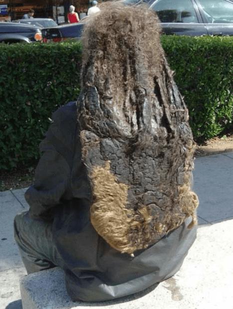 cursed image - Tree