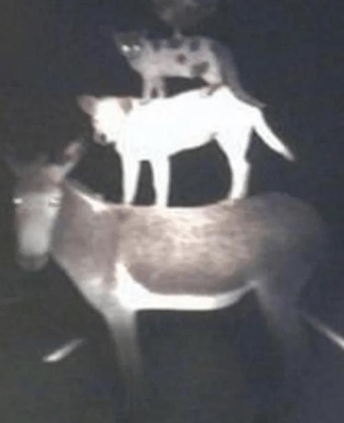 cursed image - Deer