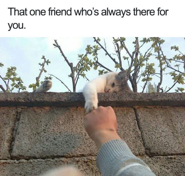 "Meme - cat - ""That one friend who's always there for you"""