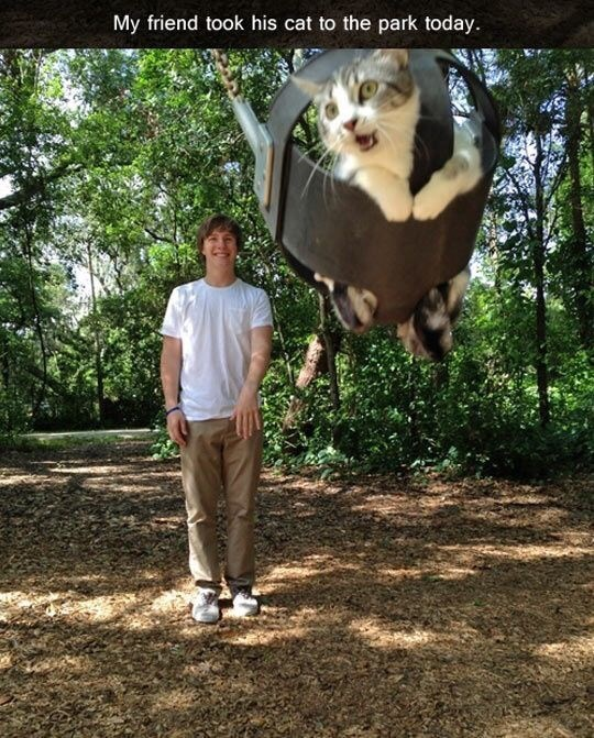 Tree - My friend took his cat to the park today.