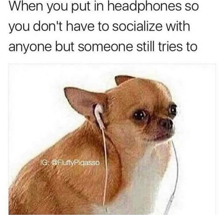 Dog - When you put in headphones so you don't have to socialize with anyone but someone still tries to IG: @FluffyPigasso