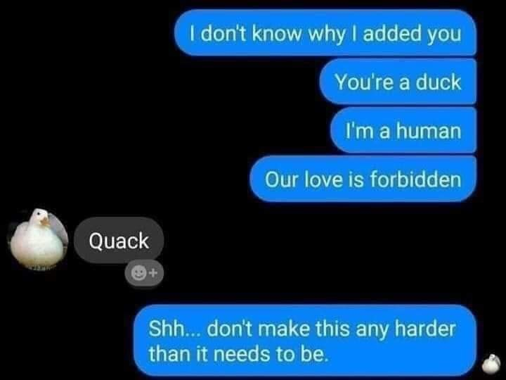 Text - I don't know why I added you You're a duck I'm a human Our love is forbidden Quack Shh... don't make this any harder than it needs to be.