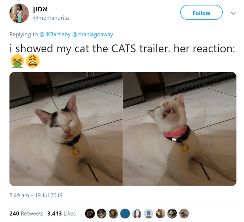 Cat - אמון Follow @merhanurita Replying to @JKBartleby @chaniagoaway i showed my cat the CATS trailer. her reaction: 8:49 am - 19 Jul 2019 240 Retweets 3,413 Likes