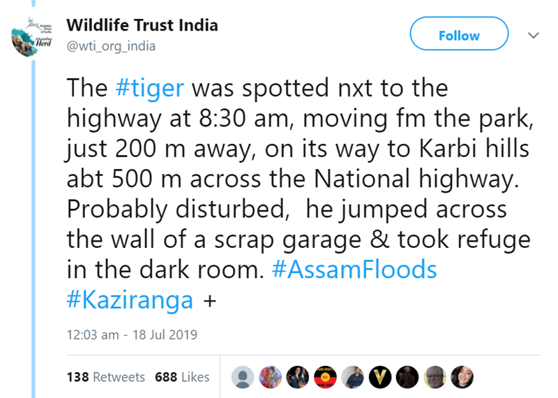 Text - Wildlife Trust India Follow Herd @wti_org_india The #tiger was spotted nxt to the highway at 8:30 am, moving fm the park, just 200 m away, on its way to Karbi hills abt 500 m across the National highway. Probably disturbed, he jumped across the wall of a scrap garage & took refuge in the dark room. #AssamFloods #Kaziranga + 12:03 am 18 Jul 2019 138 Retweets 688 Likes