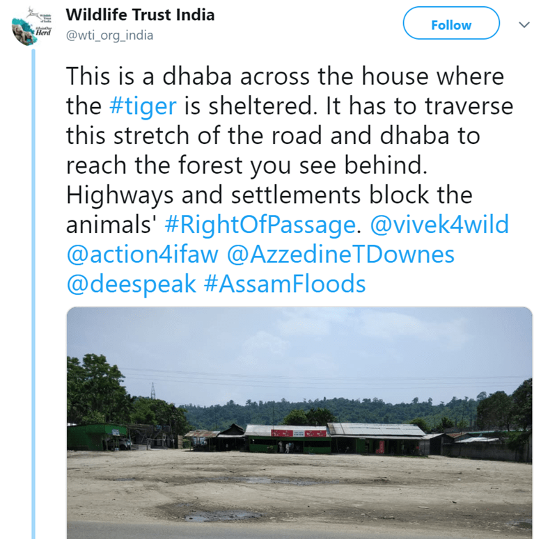 Text - Wildlife Trust India Follow Herd @wti_org_india This is a dhaba across the house where the #tiger is sheltered. It has to traverse this stretch of the road and dhaba to reach the forest you see behind. Highways and settlements block the animals' #RightOfPassage. @vivek4wild @action4ifaw @AzzedineTDownes @deespeak #AssamFloods