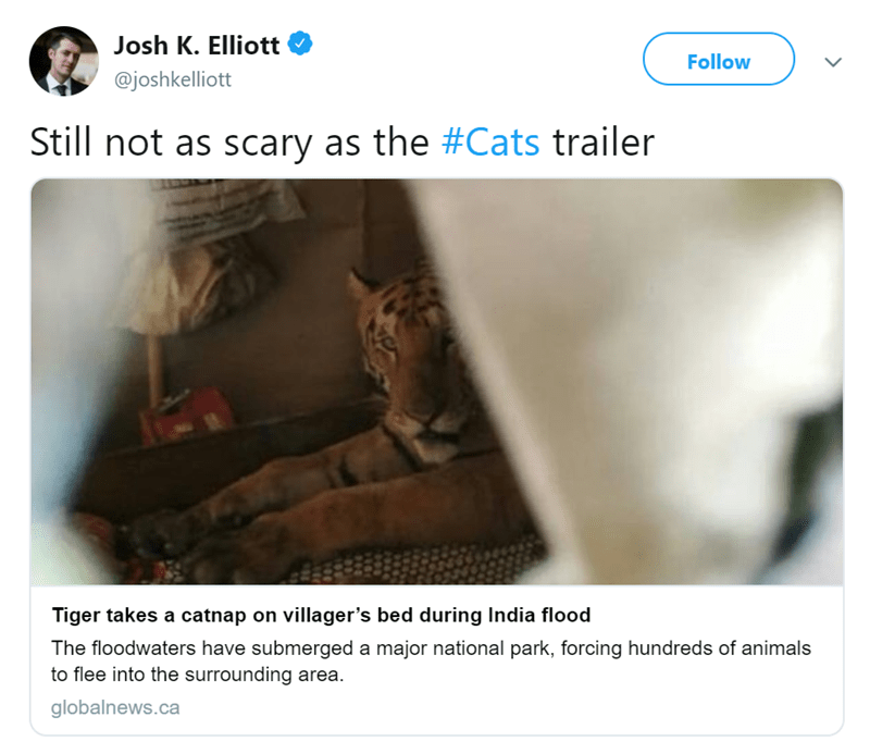 Text - Josh K. Elliott Follow @joshkelliott Still not as scary as the #Cats trailer Tiger takes a catnap on villager's bed during India flood The floodwaters have submerged a major national park, forcing hundreds of animals to flee into the surrounding area globalnews.ca