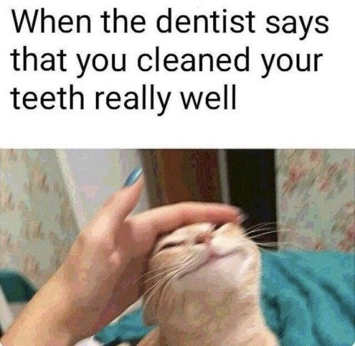 Cat - When the dentist says that you cleaned your teeth really well