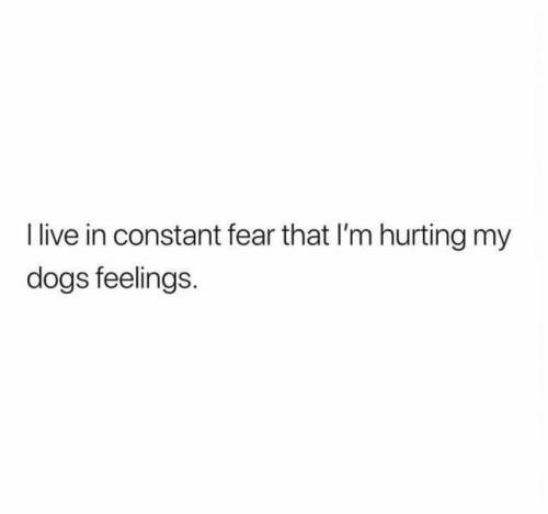 Text - Ilive in constant fear that I'm hurting my dogs feelings.
