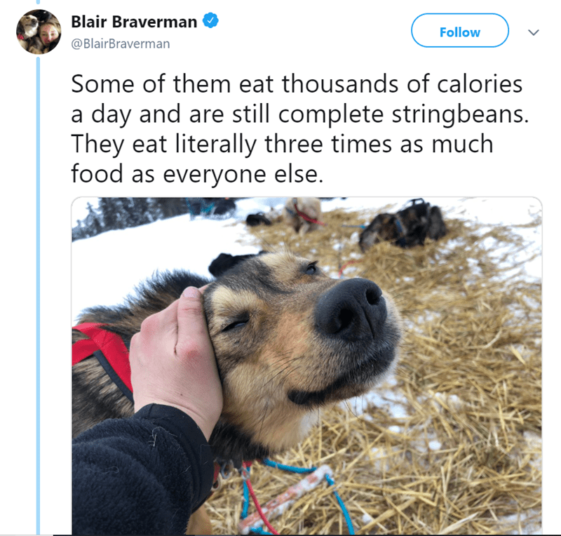 Dog breed - Blair Braverman Follow @BlairBraverman Some of them eat thousands of calories a day and are still complete stringbeans. They eat literally three times as much food as everyone else.