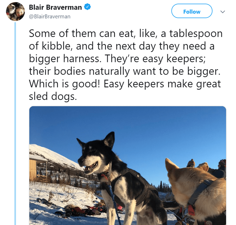 Canidae - Blair Braverman Follow @BlairBraverman Some of them can eat, like, a tablespoon of kibble, and the next day they need a bigger harness. They're easy keepers; their bodies naturally want to be bigger. Which is good! Easy keepers make great sled dogs. tsro bc