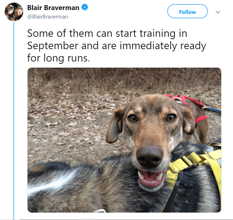 Dog - Blair Braverman Follow @BlairBraverman Some of them can start training in September and are immediately ready for long runs.