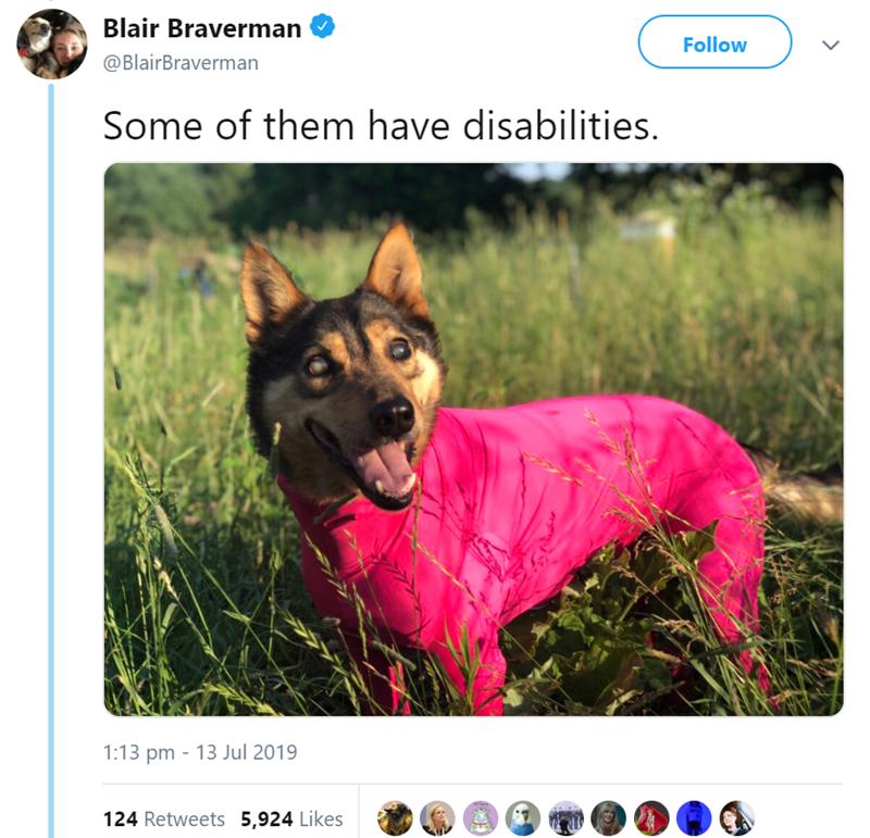 German shepherd dog - Blair Braverman Follow @BlairBraverman Some of them have disabilities 1:13 pm 13 Jul 2019 124 Retweets 5,924 Likes E