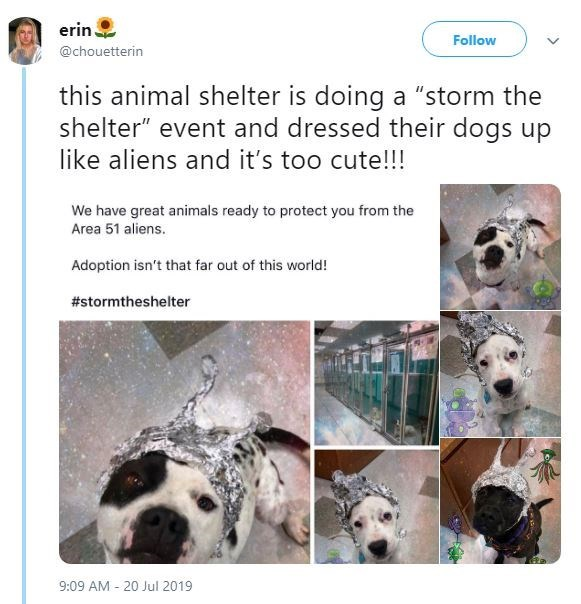 """Canidae - erin Follow @chouetterin this animal shelter is doing a """"storm the shelter"""" event and dressed their dogs up like aliens and it's too cute!!! We have great animals ready to protect you from the Area 51 aliens. Adoption isn't that far out of this world! #stormtheshelter 9:09 AM 20 Jul 2019"""