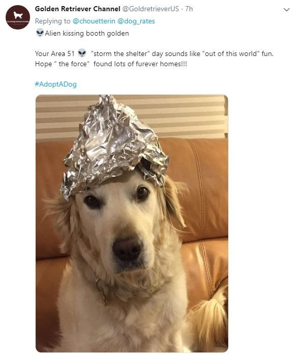 "Dog - Golden Retriever Channel @GoldretrieverUS 7h Replying to @chouetterin @dog rates Alien kissing booth golden ""storm the shelter"" day sounds like ""out of this world"" fun Your Area 51 Hope the force"" found lots of furever homes!!! #AdoptADog"