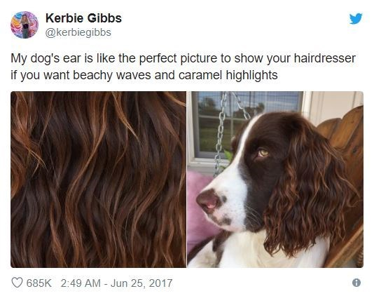Dog - Kerbie Gibbs @kerbiegibbs My dog's ear is like the perfect picture to show your hairdresser if you want beachy waves and caramel highlights 685K 2:49 AM - Jun 25, 2017