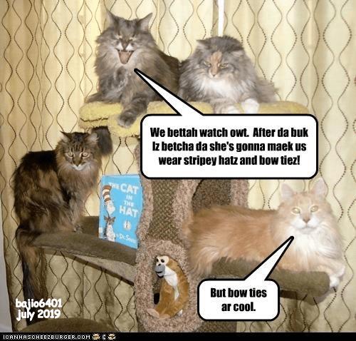 cat memes - 9335024896