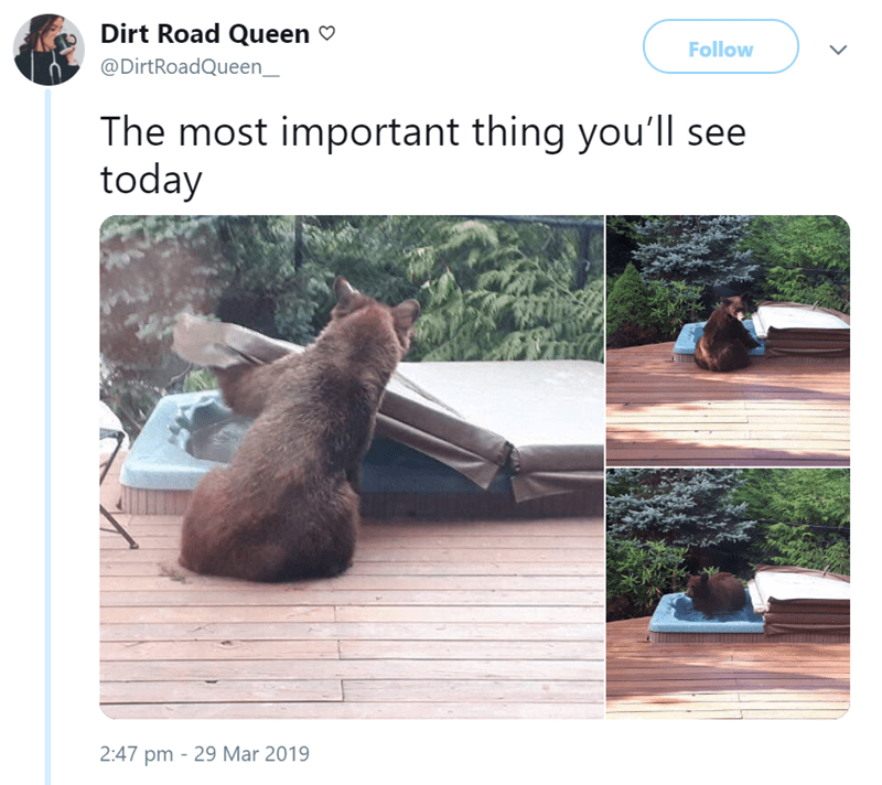 animal meme - Adaptation - Dirt Road Queen Follow @DirtRoadQueen_ The most important thing you'll see today 2:47 pm 29 Mar 2019