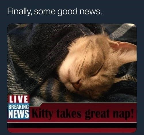 animal meme - Photo caption - Finally, some good news. LIVE BREAKING NEWS Kitty takes great nap!