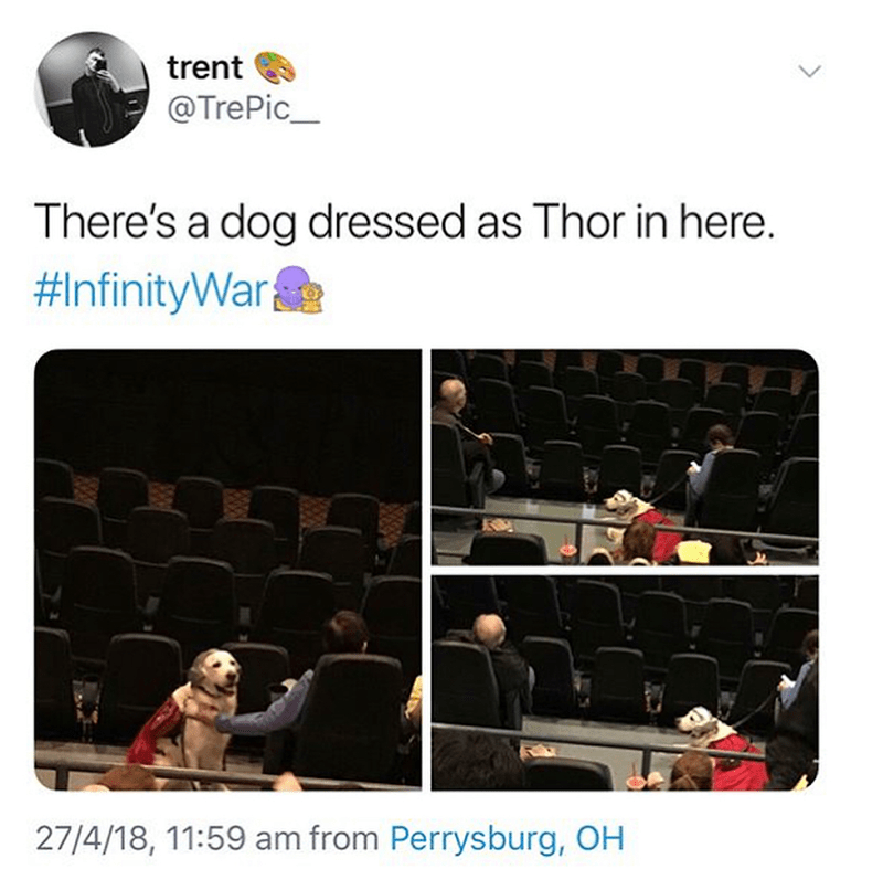 animal meme - Text - trent @TrePic_ There's a dog dressed as Thor in here. #InfinityWar 27/4/18, 11:59 am from Perrysburg, OH