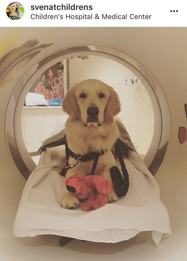 animal meme - Dog - svenatchildrens Children's Hospital & Medical Center