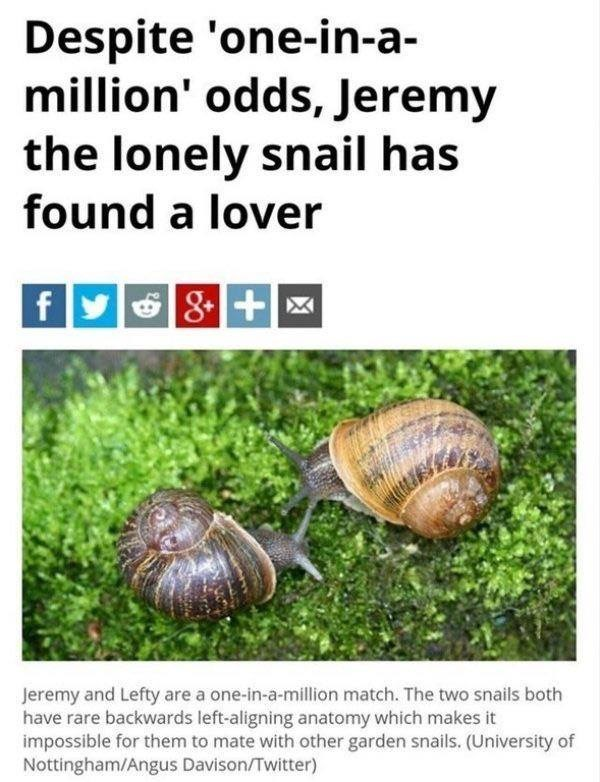 animal meme - Molluscs - Despite 'one-in-a million' odds, Jeremy the lonely snail has found a lover f Jeremy and Lefty are a one-in-a-million match. The two snails both have rare backwards left-aligning anatomy which makes it impossible for them to mate with other garden snails. (University of Nottingham/Angus Davison/Twitter)
