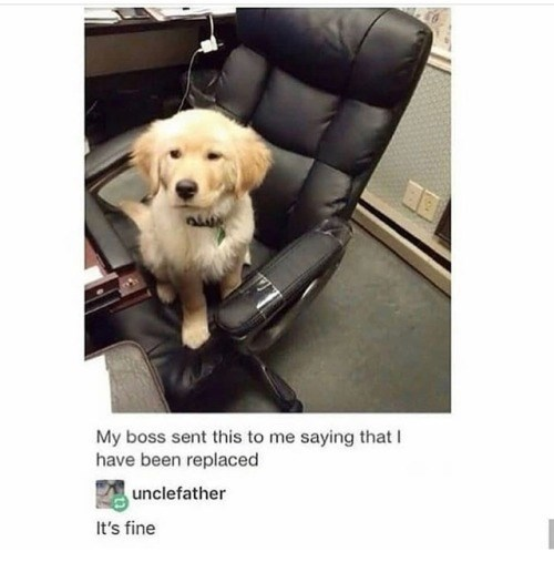 animal meme - Dog - My boss sent this to me saying that have been replaced unclefather It's fine