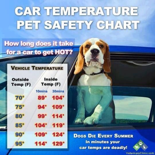 Dog - CAR TEMPERATURE PET SAFETY CHART How long does it take -for a car to get HOT? VEHICLE TEMPERATURE Inside Outside Temp (F) Temp (F) 10mins 30mins 89 104 70° 75 94 109° 80 99 114 104 119 85° 109 124 90° DoGs DIE EVERY SUM MER 114 129° In minutes your 95 car temps are deadly! VeterinaryClinio.oom